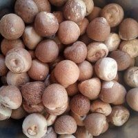 Dried betel nut high quality with cheap price