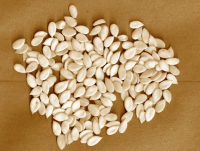 Quality Dried  Melon  Seeds for sale at great rates