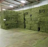 Premium Alfalfa Hay For Sale