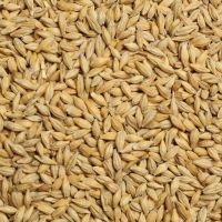 Barley Seeds/Animal feed barley/bulk barley grains