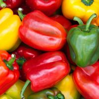 High Quality Red fresh Cayenne Pepper
