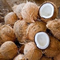 TOP QUALITY SEMI HUSKED COCONUT