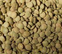 Quality Green Lentils, Crimson lentils
