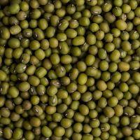 Machine Cleaned Premium Grade Green Mung Beans