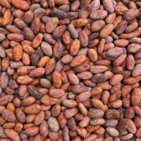 DRIED COCOA BEAN AVAILABLE AT GREAT RATES