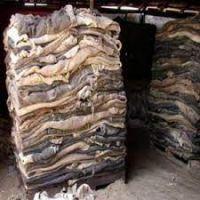 salted cow hides Genuine