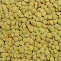 Wholesale New Crop Green Lentil For Export