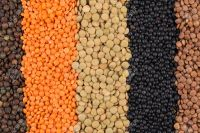 High Quality Bulk Dried Whole Green and Red Lentils