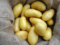 Fresh potato export prices wholesale with best quality