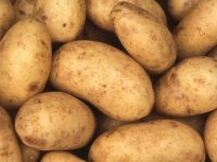 Popular vegetable fresh potato export potato wholesale price