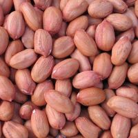 New Crop Peanuts Kernel, Raw Peanuts, Groundnuts Without Shell
