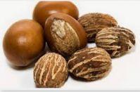 Shea nut
