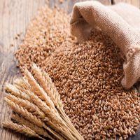 High Protein Premium Grade Soft Milling Wheat Grain