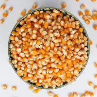 Yellow corn/maize/animal feed premium quality