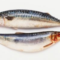 Frozen Herring Fish, Imported from the UK & Norway, Fresh Wild Seafood