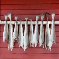 Dried Stockfish Cod from Norway,Dried Norwegian Stockfish & Cod heads/Cod and Dried Stock Fish