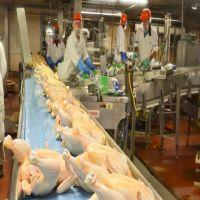 Halal Frozen Whole Chicken {Brazil Origin}