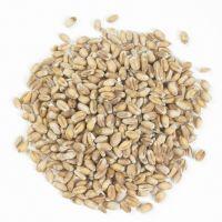 Wheat From Ukraine Dried Grade 3 Wheat Grain best wholesale price