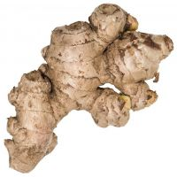 New crop hot sale fresh ginger and air dried ginger with high quality