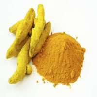100% Top Quality Turmeric Finger & Superior Quality Trusted Global Supplier At Less Market Price