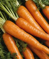 FRESH CARROT WITH HIGH QUALITY EXPORTED FROM VIET NAM