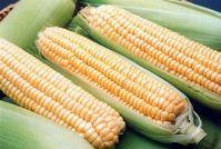 Yellow Corn, White Corn, Other Corn