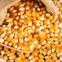 Non GMO Yellow Corn / Maize for sale