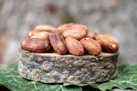 High Quality Vietnam Cocoa Beans 100% Natural