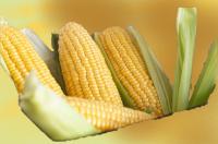 Corn from Brazil