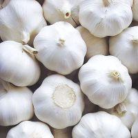 fresh vegetable garlic