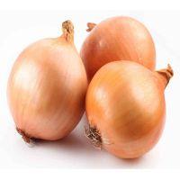 fresh vegetable onions