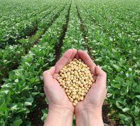 SOYBEAN GMO and NON GMO: