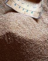 Top Quality organic Wheat Grain