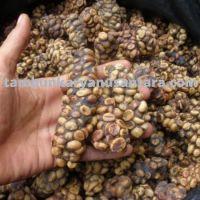 Best Luwak arabica green beans Grade 1 origin from Sumatera, INDONESIA.