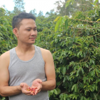 Best specialty arabica menagold grean beans origin from North Sumatera, INDONESIA.