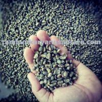 Arabica lintong green beans (Best Seller)
