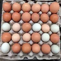 Fertilized Chicken Eggs/ Cobb 500 Broiler Chicken Eggs/Fresh Cobb 700 Fertile eggs