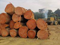 Tropical Round Hardwood Timber Logs