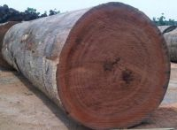Mahogany Timber Hardwood Logs