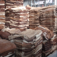 Wet Salted Cow Skin