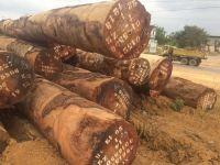 Tali Timber Hardwood Logs