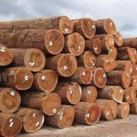 African Round Teak Wood Log