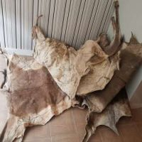 Raw Unsalted Cow Hides/Skin
