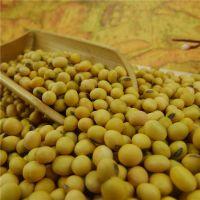 Non - GMO Soya Beans