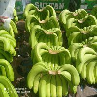 Indian Cavendish Banana