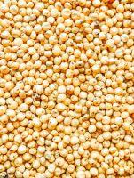 Sorghum (Guinea Corn, millet)