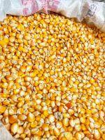 Yellow Maize and Corn
