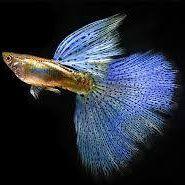 aquarium fresh water fish