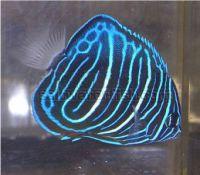 Exporter of  high quality ornamental fish and aquarium plants