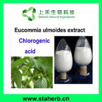 Factory supply Chlorogenic acid, Eucommin leaf extract, Clean heat